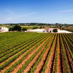 Wijnvelden I pastitni (1)